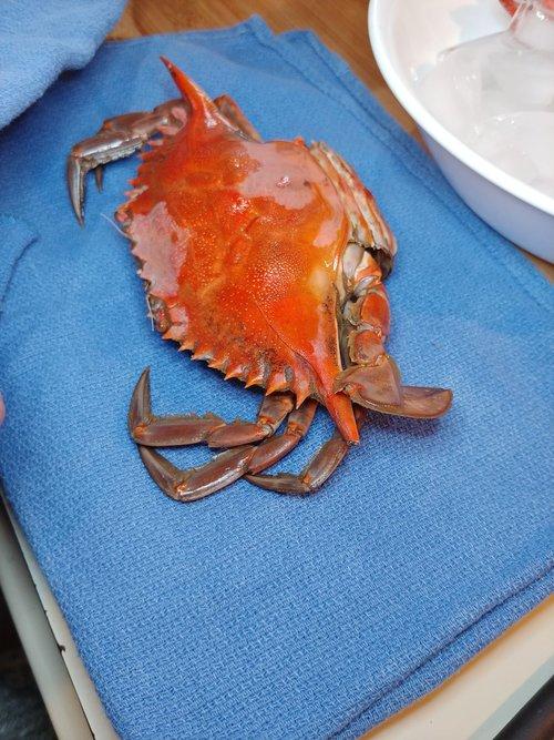 crab  seafood  crustacean