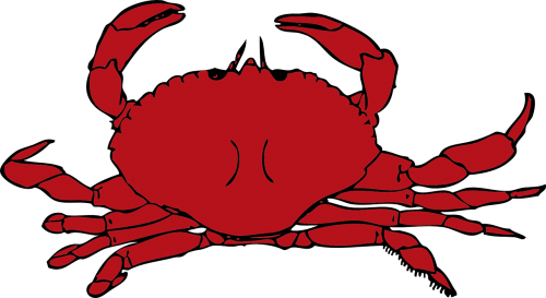 crab red crustaceans