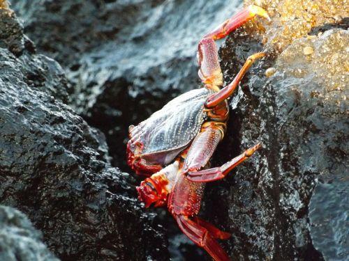 crab rocks wildlife