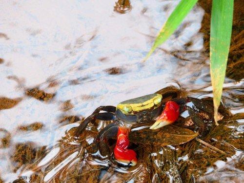 crab  water  marine