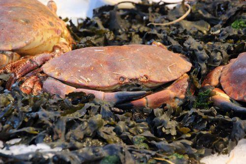 crab delicacy gourmet
