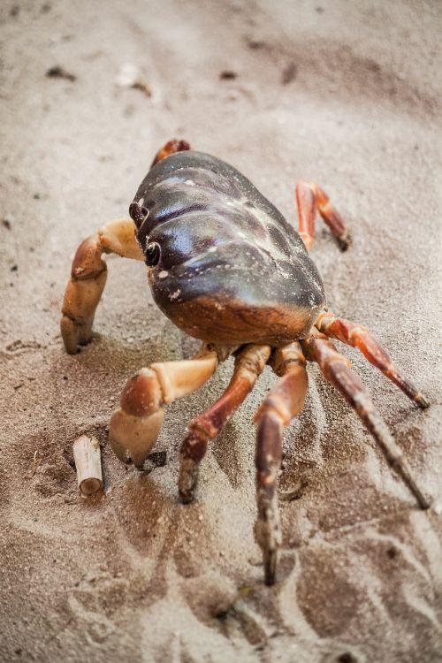 crab sea life crustacean
