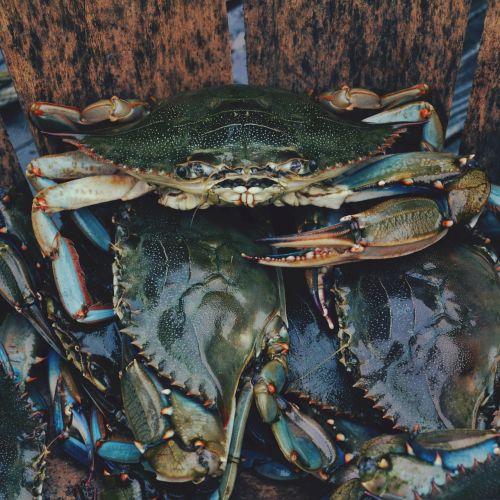 crab crawfish crayfish