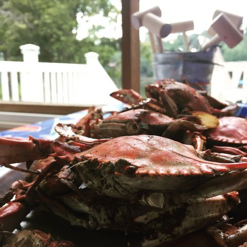 crab blue crab seafood