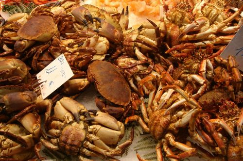 crabs seafood food