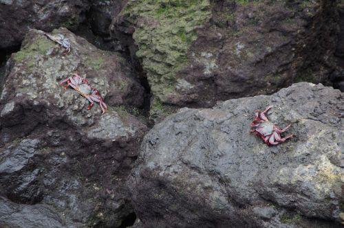 crabs rock bank