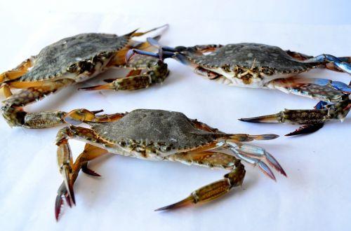 crabs sea food seafood