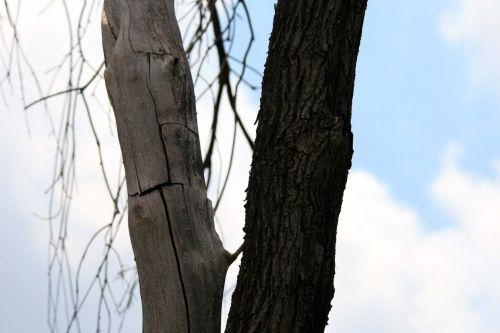 Cracks In Trunk Of Tree