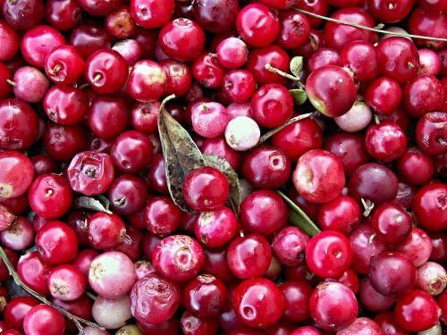 cranberries black berry forest fruit