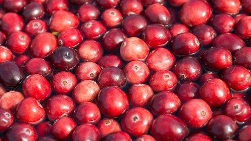cranberries  harvest  berries