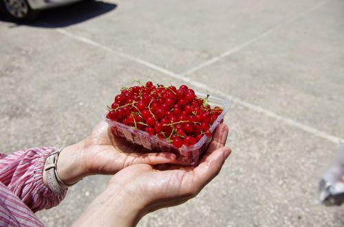 cranberry fruit fresh