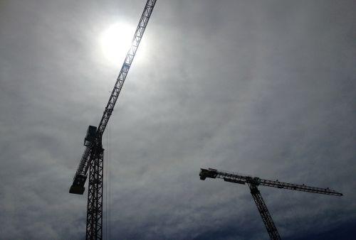 crane sun fern