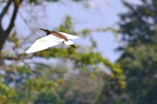 crane flying wings