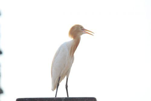 crane bird long-necked