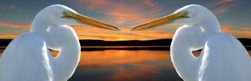 crane bird migratory birds
