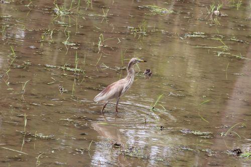 crane field water