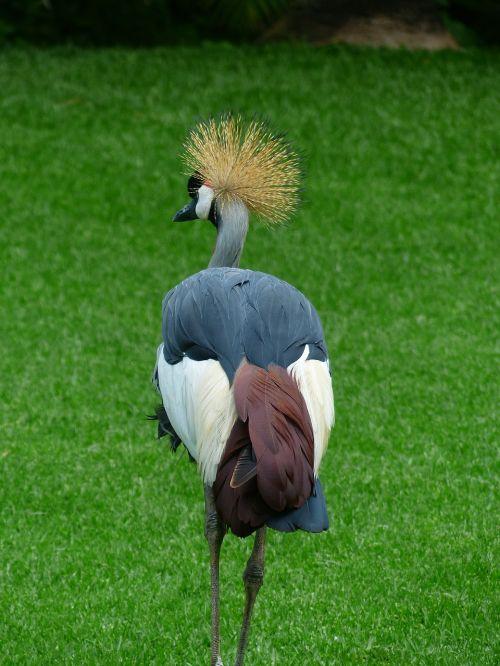 crane bird spring crown