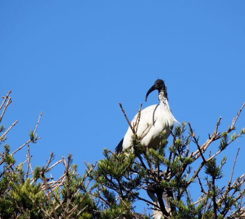 Crane On Tree Top
