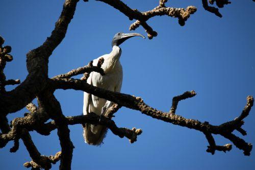 Crane Standing On The Tree