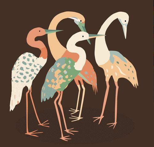 cranes  birds  long necked