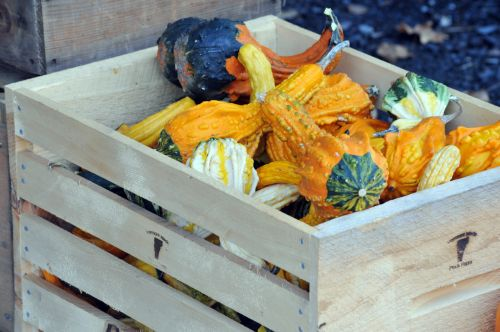Crate Of Colorful Gourds