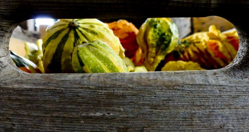 Crate Of Gourds