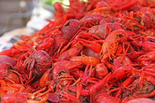 crawfish mud bugs south