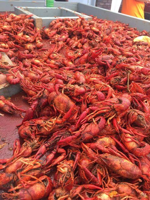 crawfish crawfish boil crustacean
