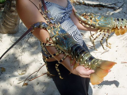 crawfish sea crustacean