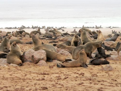 crawl group sea