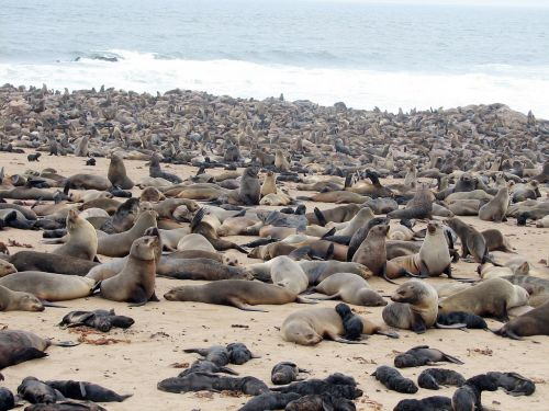 crawl namibia beach