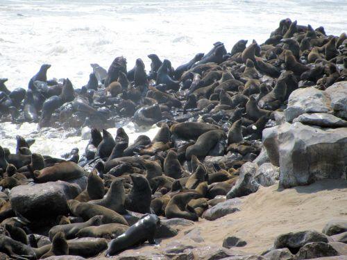 crawl skeleton coast namibia
