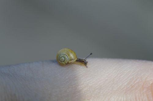 crawling snails steinig yellow