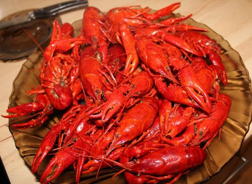 crayfish chinese crayfish