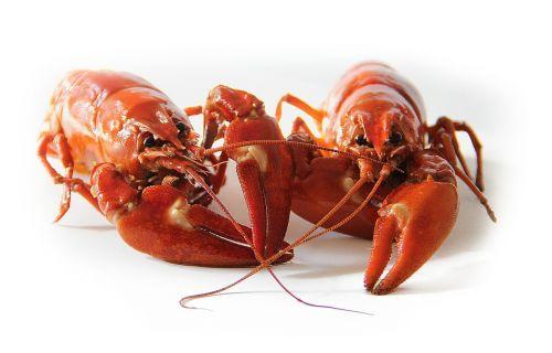 crayfish sweden crayfish party