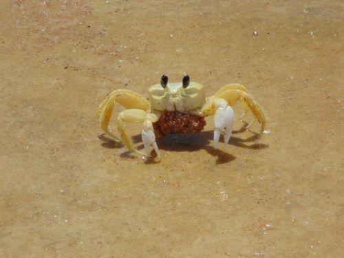 crayfish siri animals
