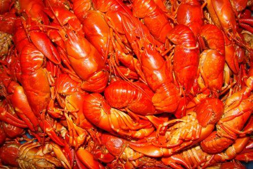 crayfish crayfish party seafood