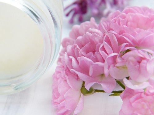 cream  roses  blossom