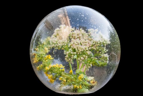 creative glass bol