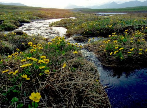 creek mountain plateau flowers