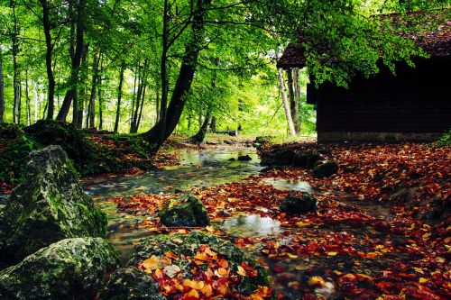 creek autumn fall leaves