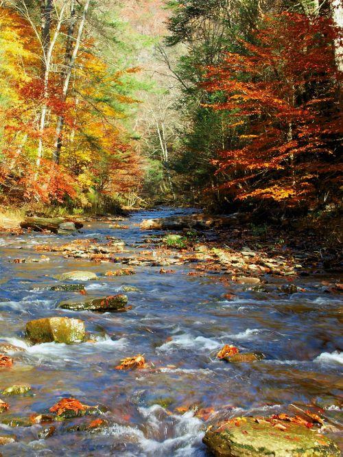 upelis, kritimas, gamta, kraštovaizdis, vandens šlaitas, spalvos, upelis rudenį
