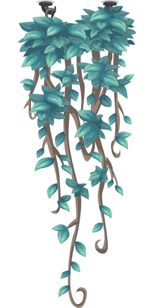 creeper hanging plant hanging