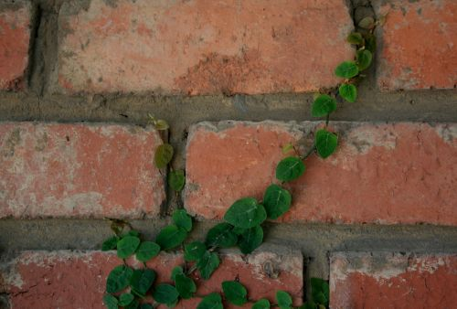 Creeper Clinging To The Wall