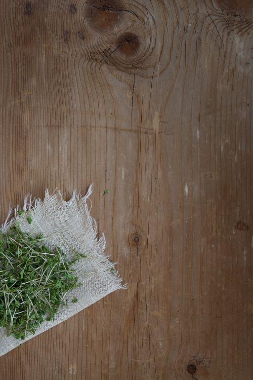 cress plant green