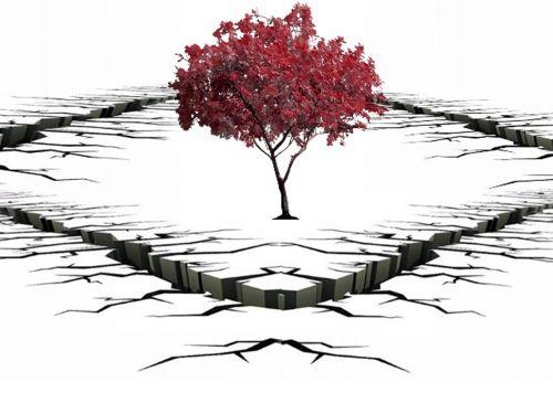 crevasse tree solitary tree