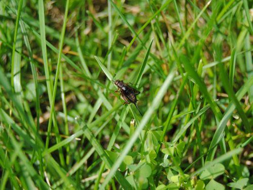 Cricket On Grass