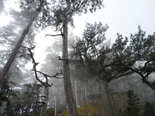 crimea ai-petri mountains