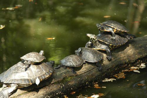 croatia turtles park turtles