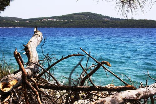 croatia sea drift wood